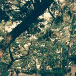 松林は20年前と同じ風景でした。